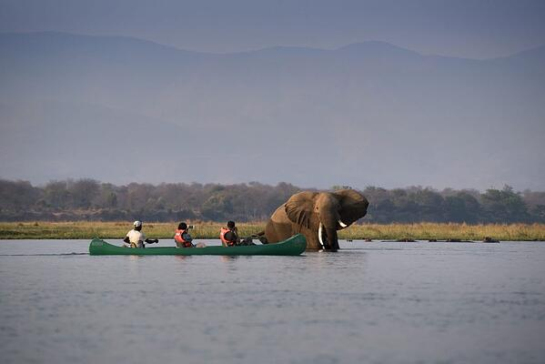 CANOE-Zambezi-Expeditions-Mana-Pools-National-Park-Zimbabwe-Safari-Tented-Camp-African-Bush-Camps-Canoe-with-elephant-1-1024x684-1