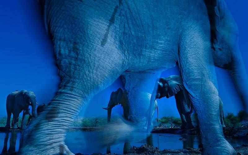 Wildlife Photographer of the Year Winner 2013