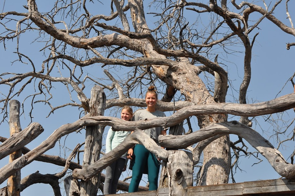 Zim Water Hole Tree