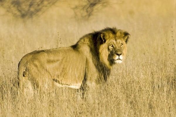 safaribill.africa_43984971_296452964301910_8311465611297608851_n
