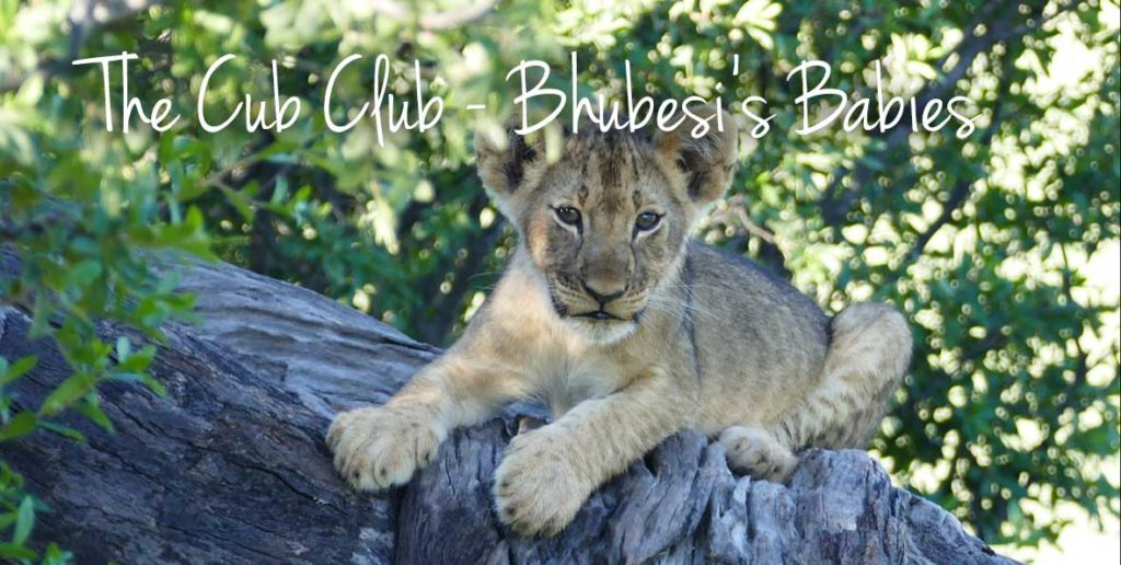 The-Cub-Club-Bhubesi-1024x516